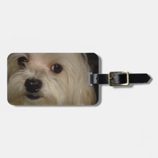 Maltese with Red Bow Luggage Tag