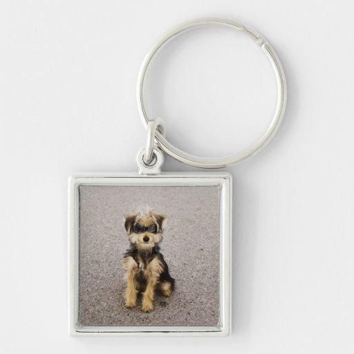 Maltese, Yorkshire terrier mix. Alberta, Canada Keychain