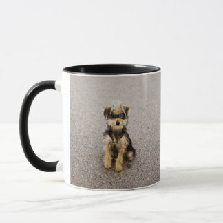 Maltese, Yorkshire terrier mix. Alberta, Canada Mug