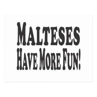 Malteses Have More Fun! Postcard
