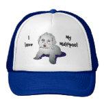 Maltipoo Cute Puppy Trucker Hat