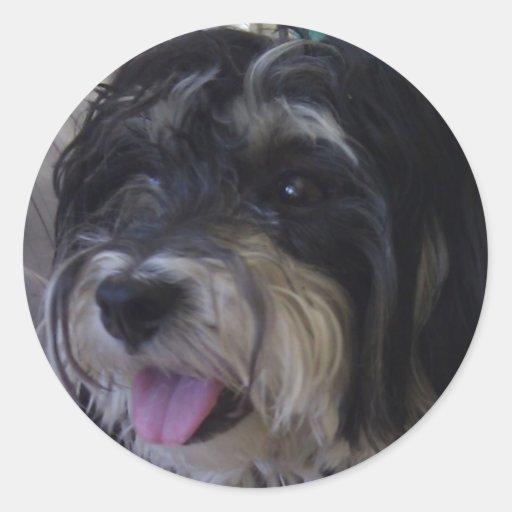 maltipoo dog sticker