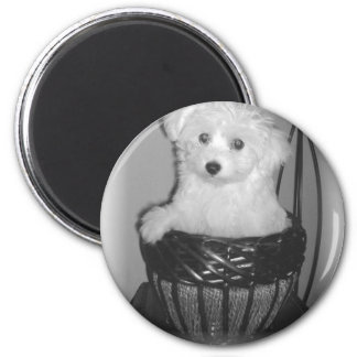 MaltiPoo Products 2 Inch Round Magnet