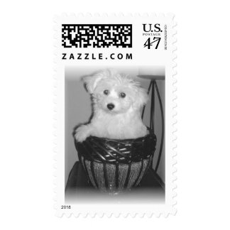 MaltiPoo Products Postage