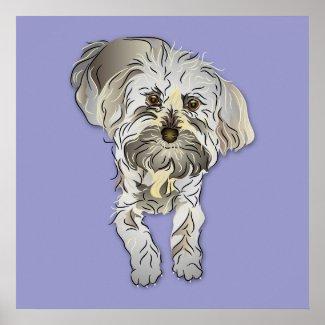 Maltipoo Puppy zazzle_print