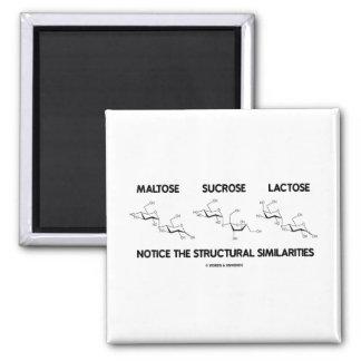 Maltose Sucrose Lactose Structural Similarities 2 Inch Square Magnet