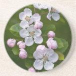 Malus Blossom Coaster