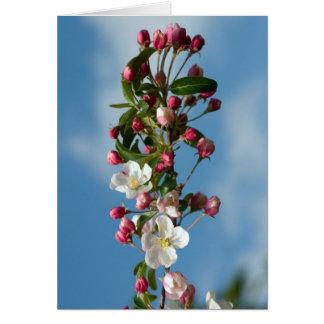 Malus Floribunda apple flowers Card