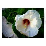 Malva color de rosa de pantano (hibiscos) felicitaciones