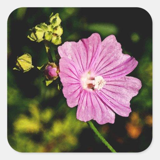 Malva rosado con los brotes calcomanía cuadradase