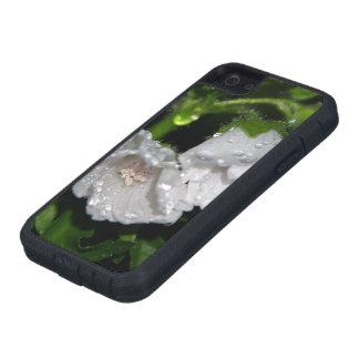 Malvales iPhone SE/5/5s Case