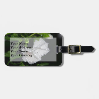 Malvales Luggage Tag