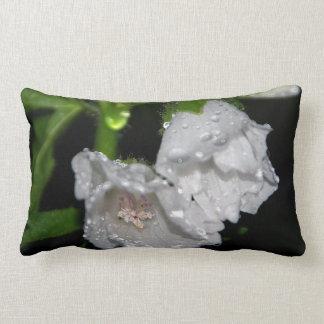 Malvales Pillow
