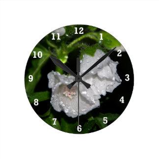 Malvales Round Clock