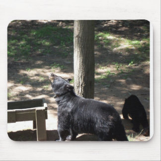 Mama and baby black bears. mouse pad