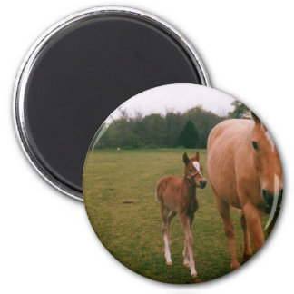Mama and baby horse 2 inch round magnet