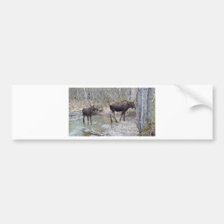 Mama and Baby Moose Bumper Sticker