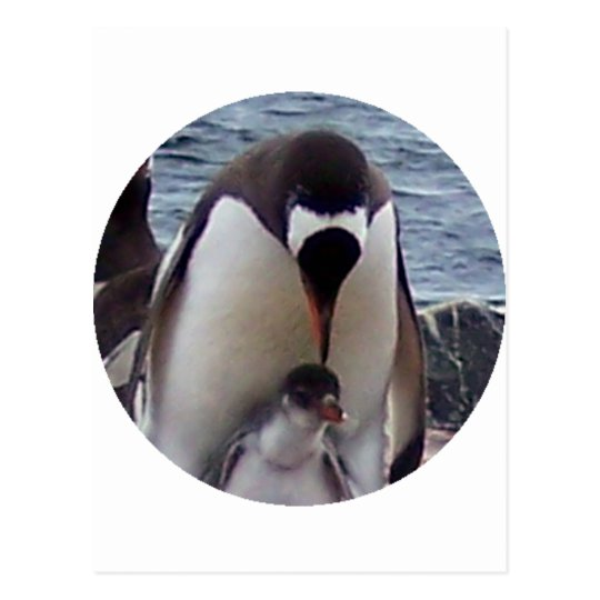 Mama and Baby Penguin Postcard