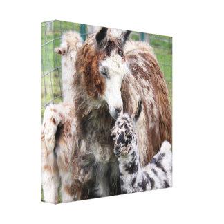Mama & Baby Llama Kiss Canvas Print