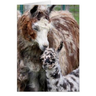 Mama & Baby Llama Kiss Card