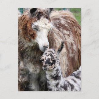 Mama & Baby Llama Kiss Postcard