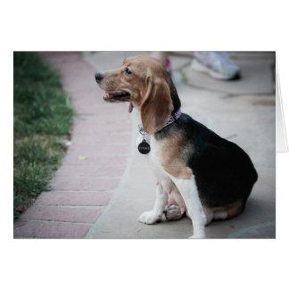 Mamá Beagle Tarjeta De Felicitación