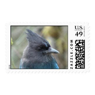 Mama Blue Stamp