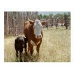 Mamá Cow y becerro