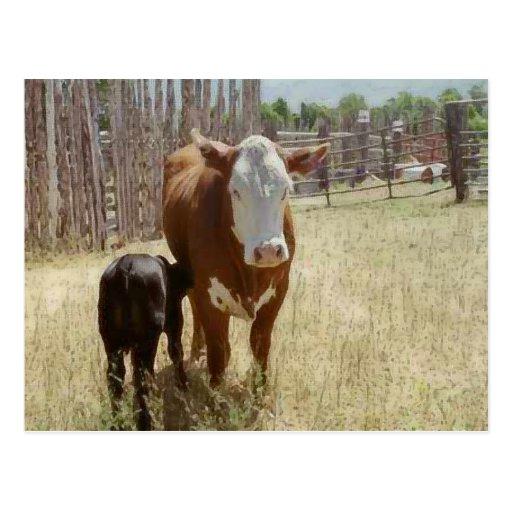 Mamá Cow y becerro Postales
