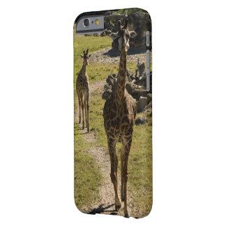 Mamá de la jirafa y becerro de la jirafa del bebé funda barely there iPhone 6