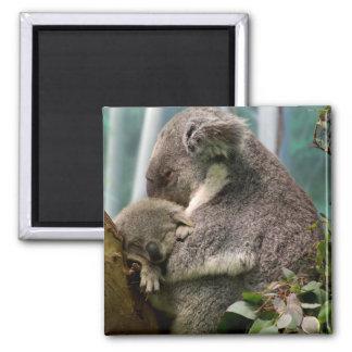 Mamá de la koala y nuevo bebé imán cuadrado