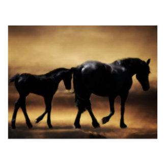 Mamá de los caballos e I Postal