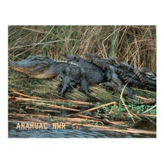 Mamá del cocodrilo postales