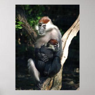 Mamá del primate y poster del bebé