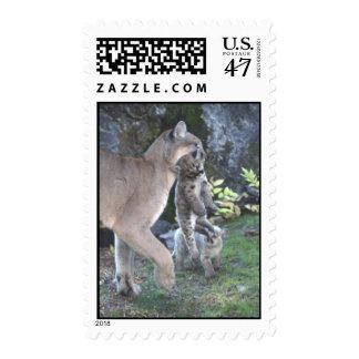 Mamá del puma y franqueo de Cubs Estampilla