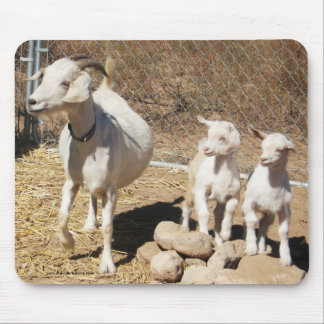 Mama Doe and  Kids - Pygmy Goat Family - Western Mouse Pad