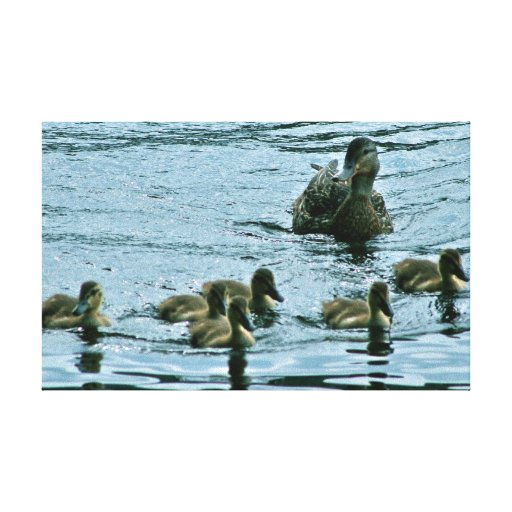Mama Duck & Her Six Ducklings Canvas Print