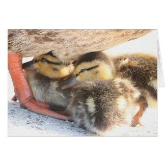 Mama & Ducklings Card