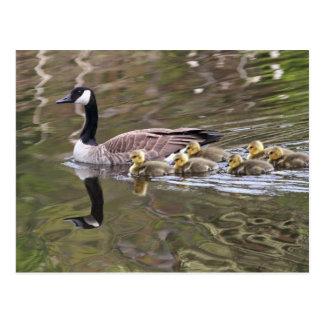 Mamá ganso y foto de los gansos del bebé postal