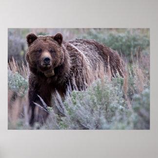 Mamá Grizzly Impresiones