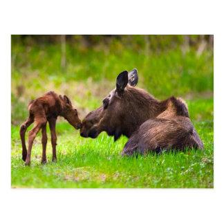 Mama Moose & Her Baby Postcard