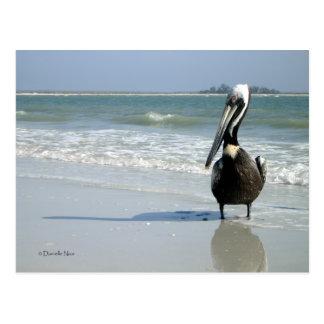 Mamá Pelican Postcard Postales