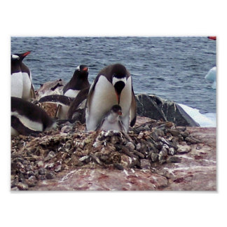 Mama Penguin, Baby Penguin Posters