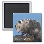 Mamá Possum Babies Pro-Life Humorous Imanes Para Frigoríficos