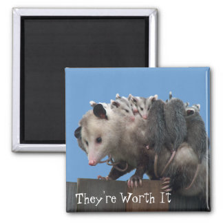 Mama Possum Babies Pro-Life Humorous 2 Inch Square Magnet