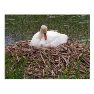Mamá que adora Swan y postal de los pollos del cis