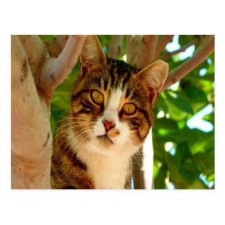 mamá que espera y amor del gato para postales
