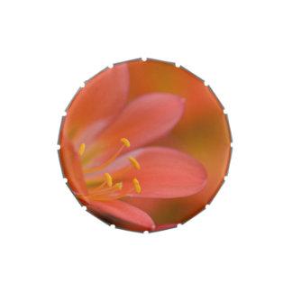 Mamá roja bonita de la flor de Clivia Latas De Caramelos