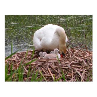 Mamá Swan y postal de los pollos del cisne