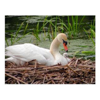Mamá Swan y postal del bebé